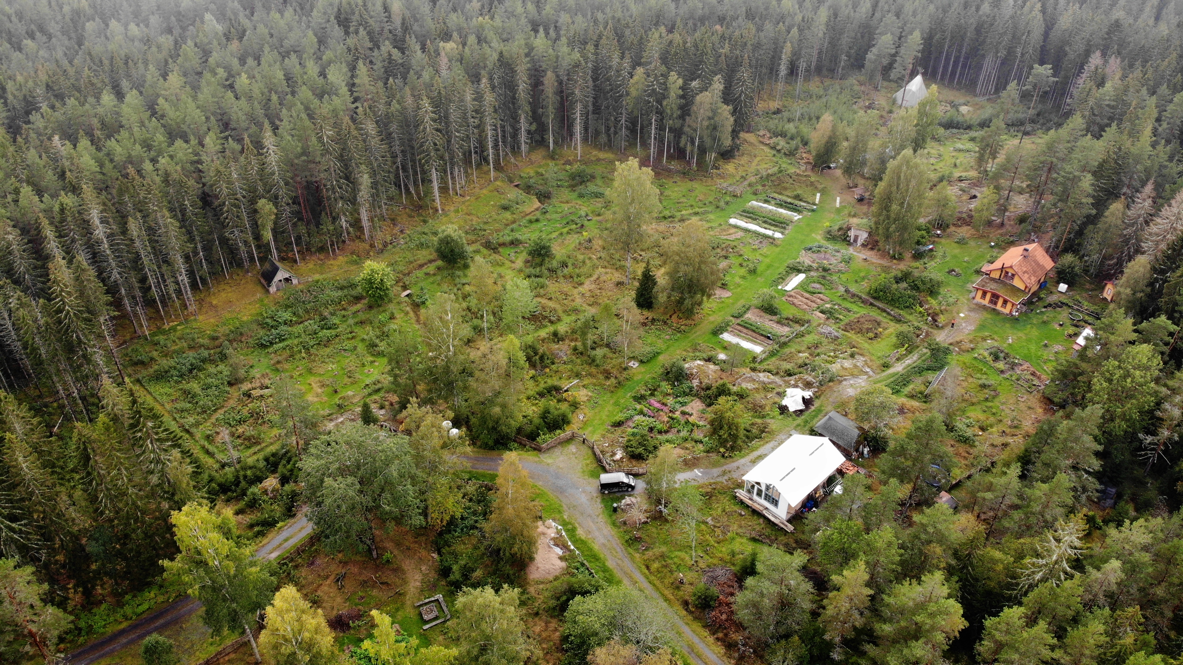 skogstradgard5