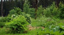 skogstradgard_alst 2