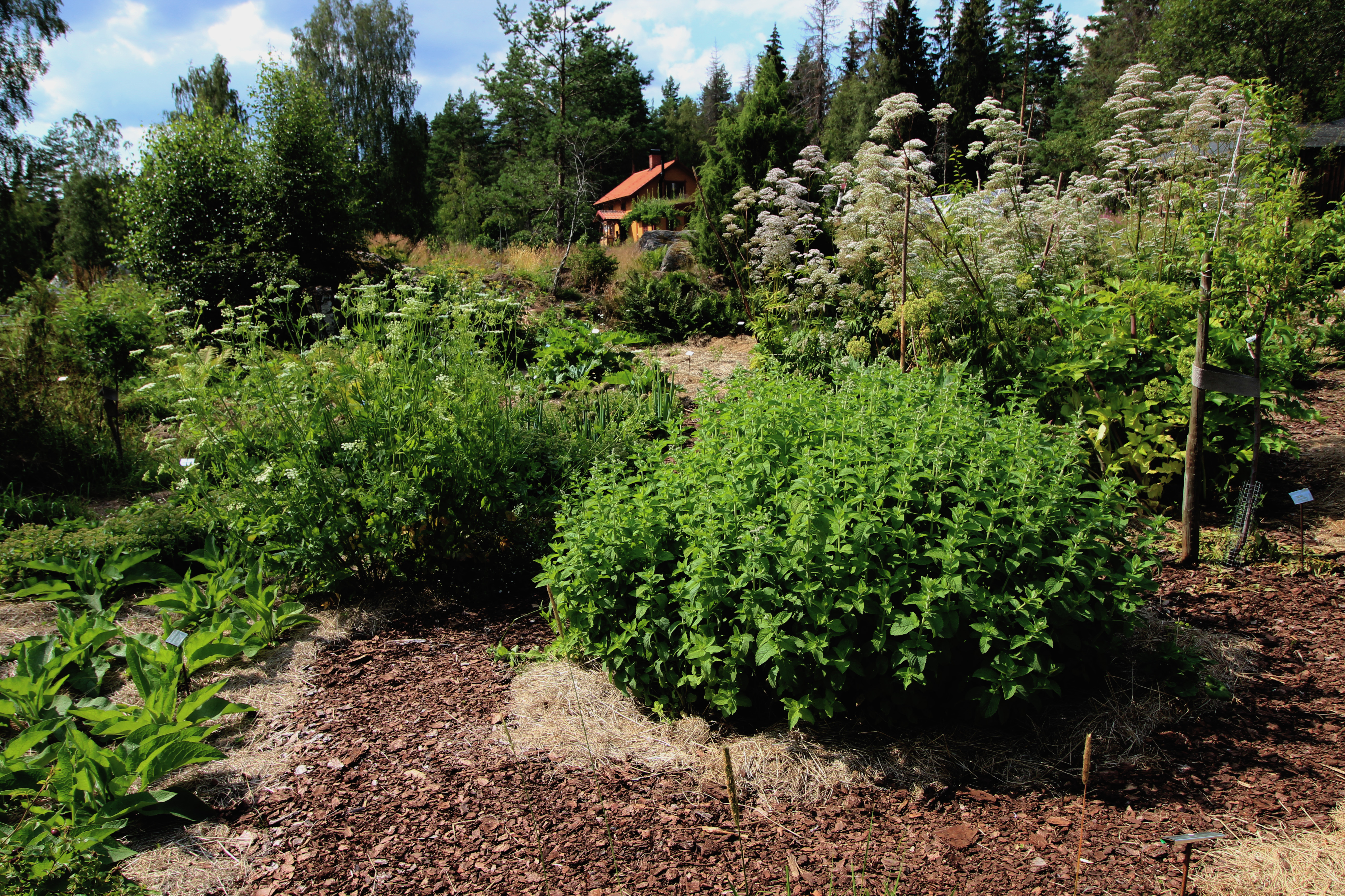 skogstradgard_2-arig
