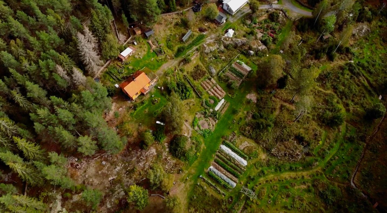 skogstradgard3