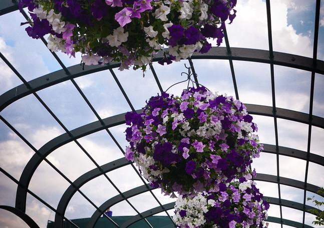 Wimbledon Flowers 2015