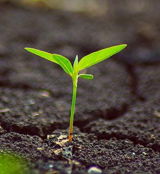 grow-plants.jpeg