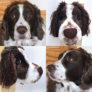 wooltide springer spaniel commission hoo
