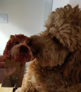 doodle dog commission