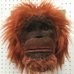 Orangutan Bighead
