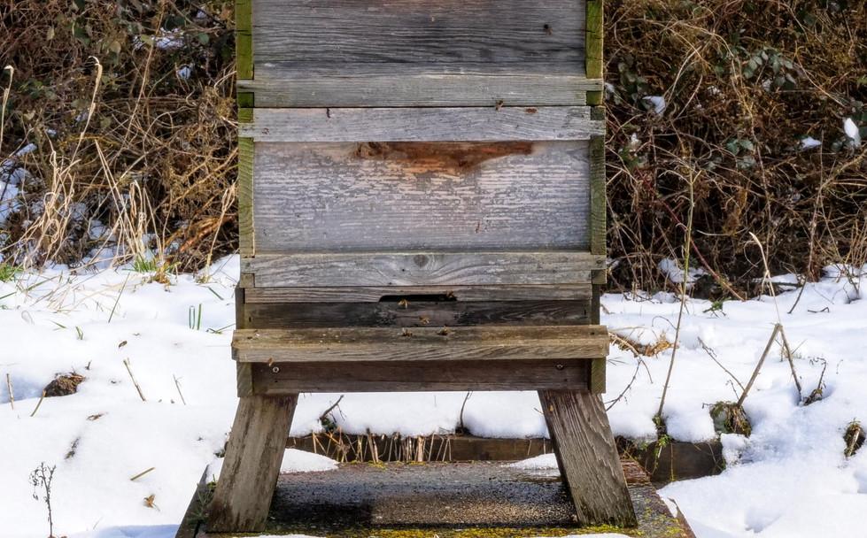 Hive in Snow.JPG
