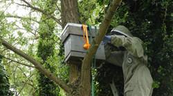 Bird Box Cutout20