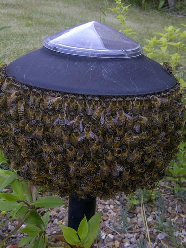 Tiny Swarm on Garden Lamp