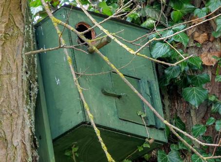 Bird Box Swarm Removal - May 2018