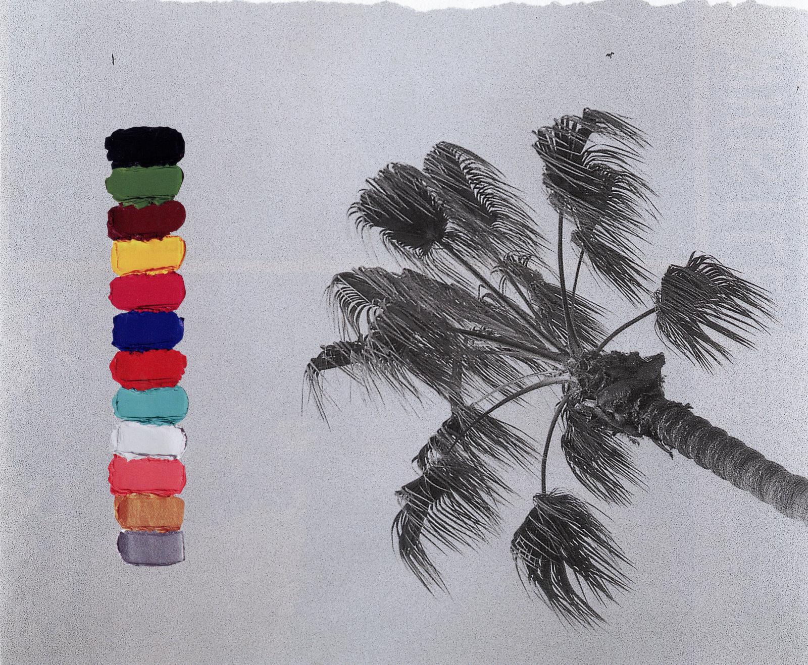Paint Palm