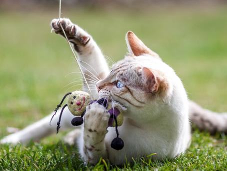 Vepsestikk hos hund og katt
