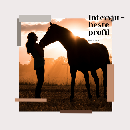 Intervju - hesteprofil