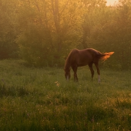 Tips mot sommerplager for hesten