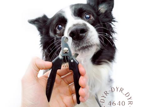 Hvorfor må hundens negler klippes?