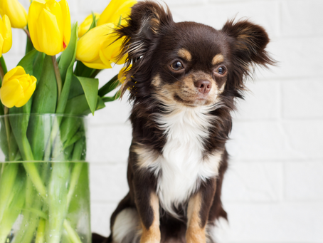 Trygg og fin påske for ditt kjæledyr!