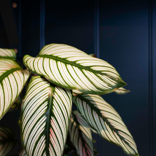 Blue paneling with plant