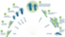 Headlice_Lifecycle.jpg