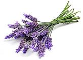lavendar.png