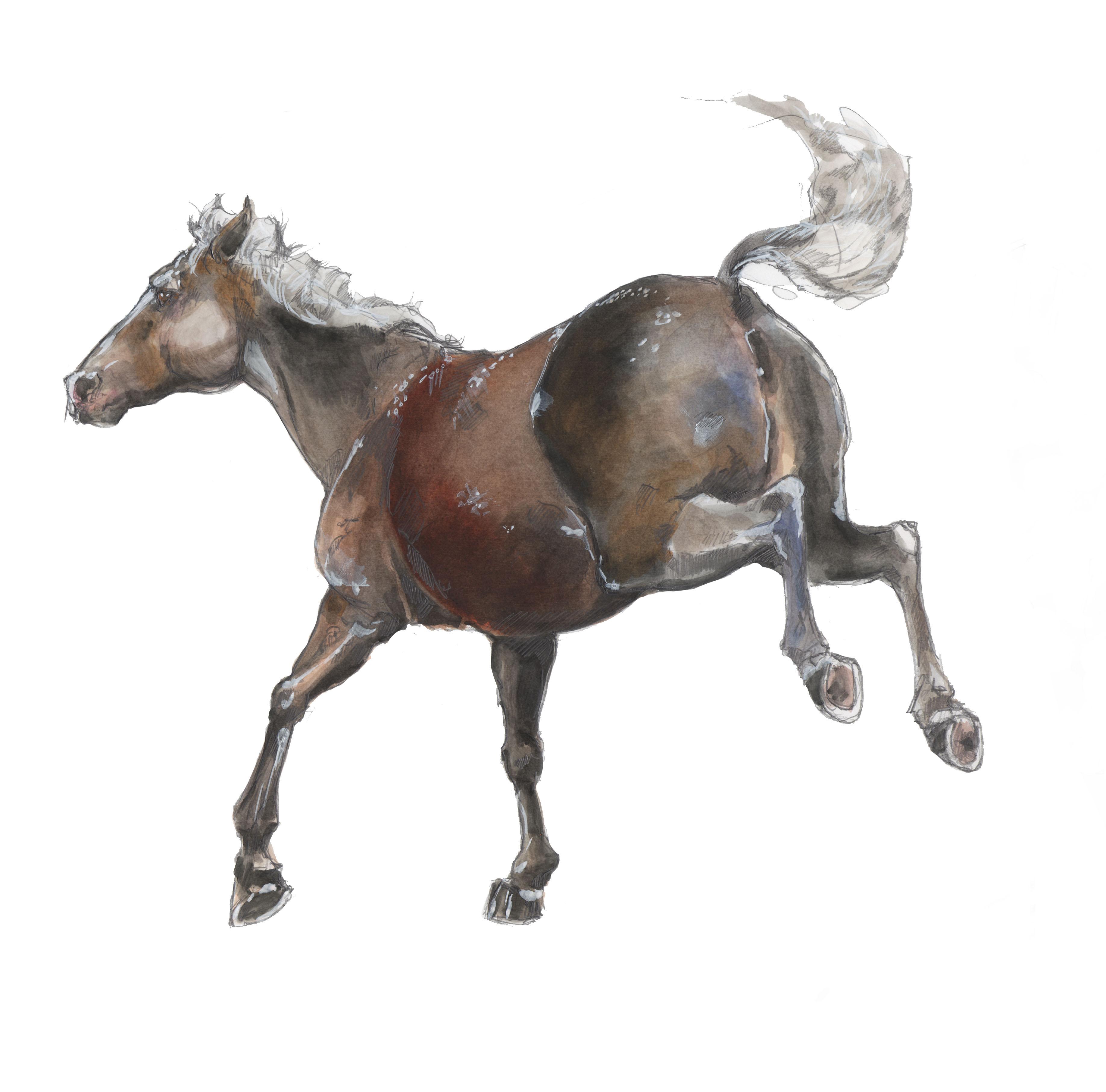 gallop1