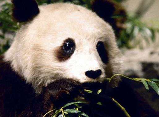 Make Python Pandas go fast