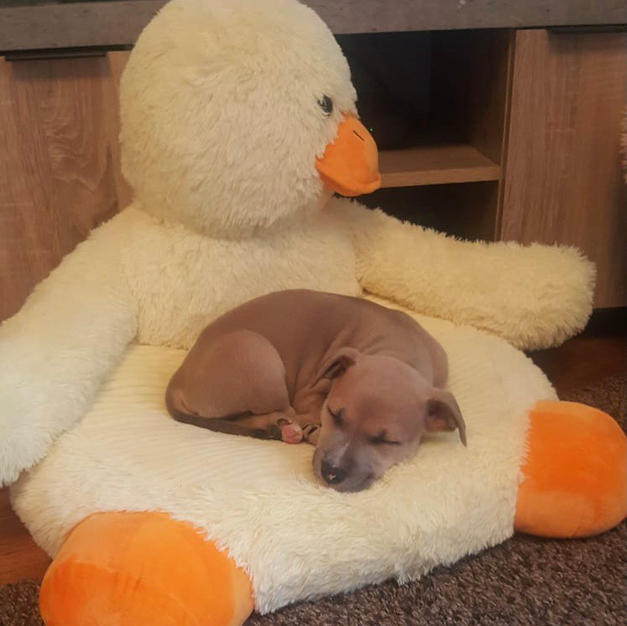 The Duck and Dog