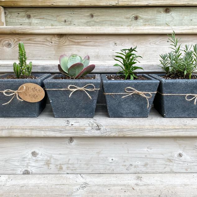 Mini Planters