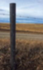 Fence post.JPG