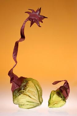 Bulbes: Chardons à poils doux