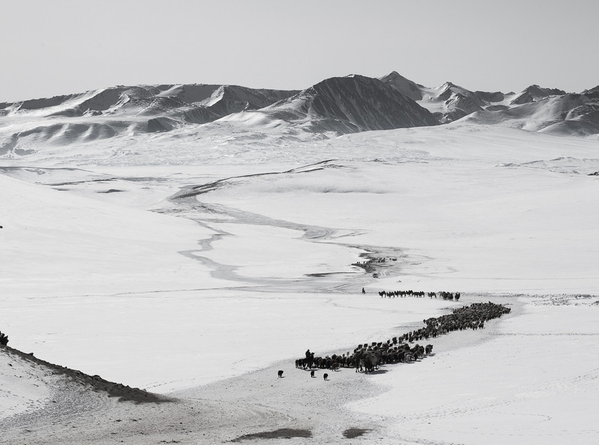 Winter Migration .  Altai Mountains, Western Mongolia. © 2017 www.martinvogt.ch