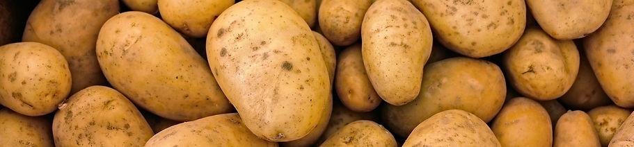 Pomme de terre.jpg