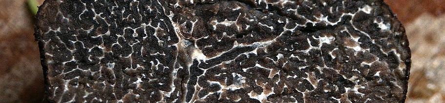 winter-truffle-203032_960_720.jpg