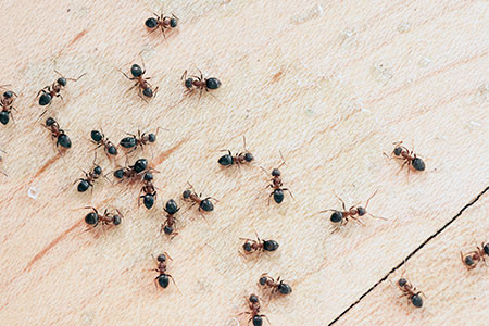 Why you should call ants exterminators experts to keep ants out of your home?