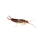 General pest control in Temecula with the local bug guy