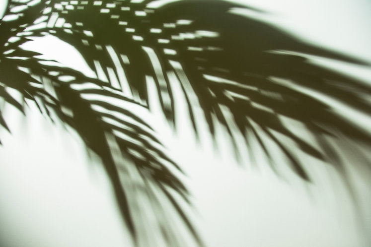 dark-shadow-palm-leaves-background.jpg