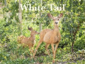 White Tail, 375ml, 15.6% alc./vol.
