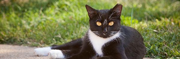 eartip cat.jpg