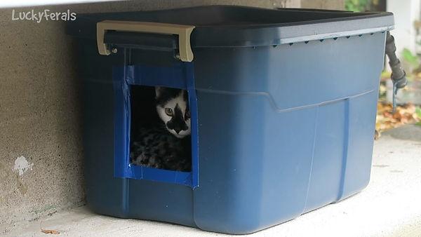 Outdoor cat shelter.jpg