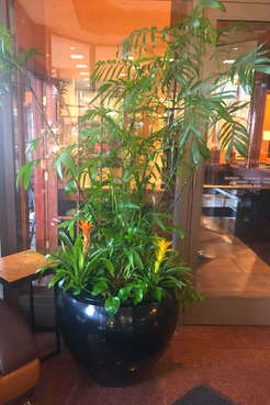 BigTall Plant.png