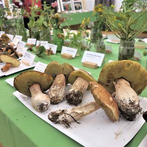 Střípky z výstavy hub v Pardubicích