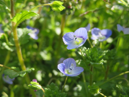 花から野菜の起源を垣間見る