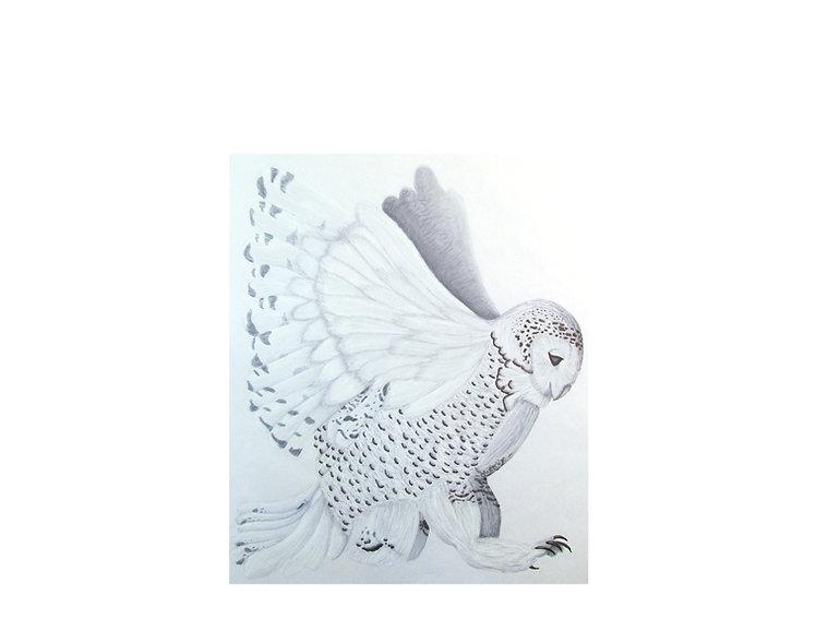 white owl.jpg