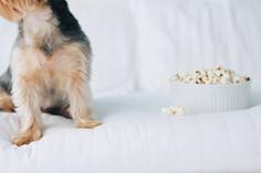 popcorn lovers | easy