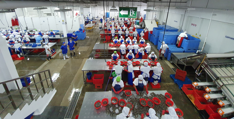 Acuamaya Processing Plant