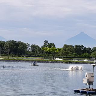 Guatemalas Volcanic background, finca La Danta, Acuamaya