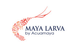 Best shrimp come from Maya Larva