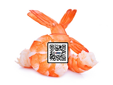 Shrimp with QR.png