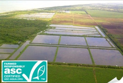 Saquija Shrimp Farm