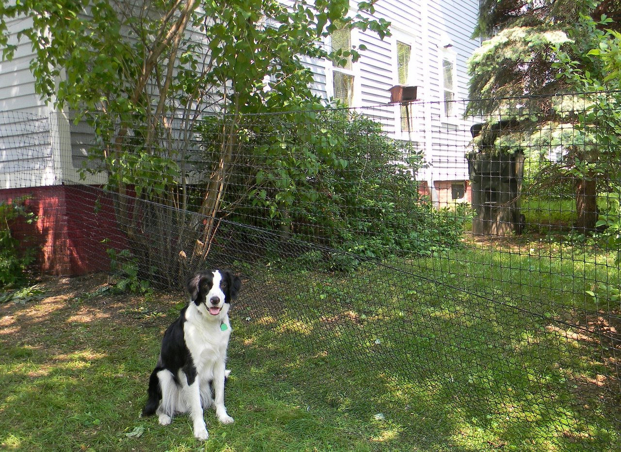 Pet Playgroundz Dog Fence Nonelectric Installed Diy Near
