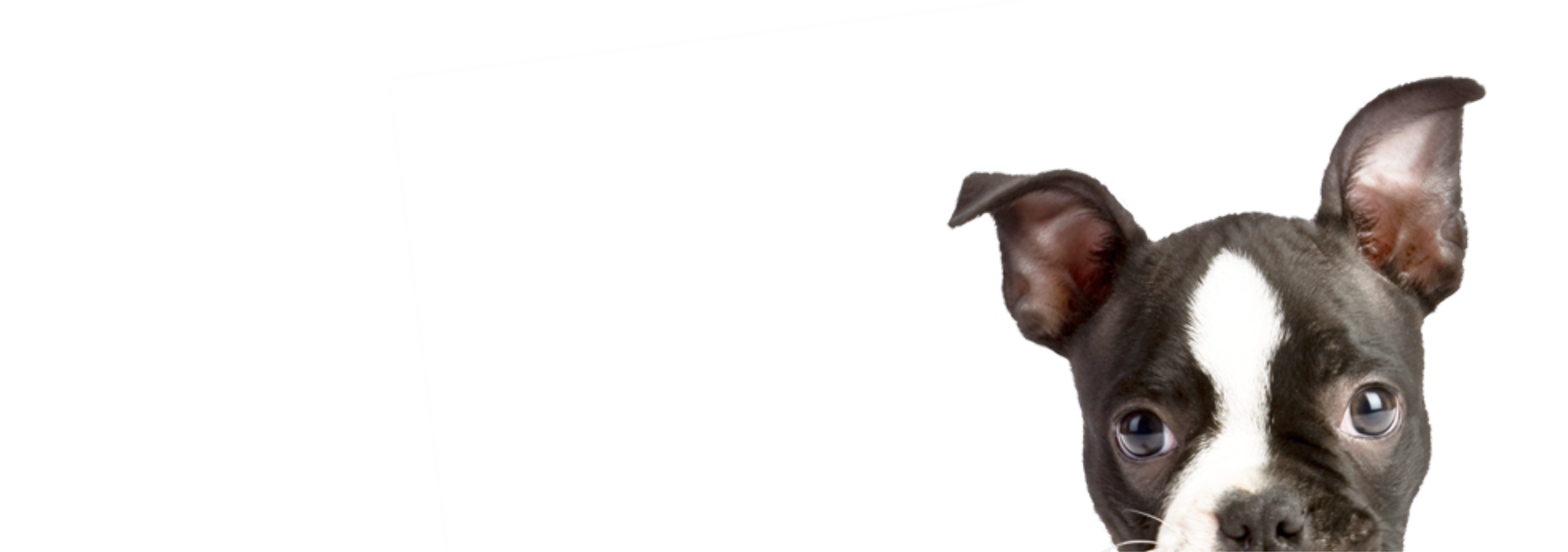 peeping puppy2.png