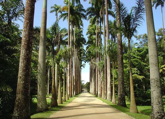 6 - Botanical Garden and Tijuca Rain Forest / Jd Botânico e Floresta da Tijuca